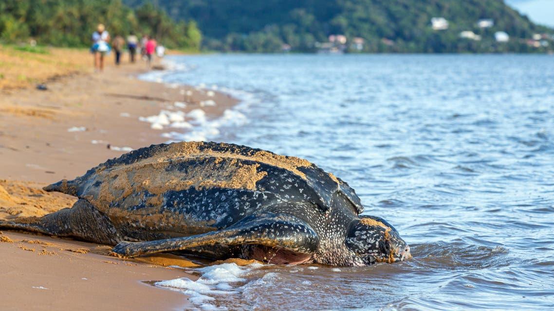 tortoise (AFP)