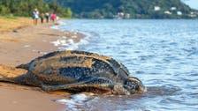 Russia seizes over 4,000 smuggled endangered tortoises
