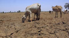 Satellite data shows hunger looming in Senegal, Mauritania