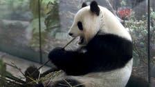 Double cuddle: Berlin zoo celebrates birth of 2 panda cubs