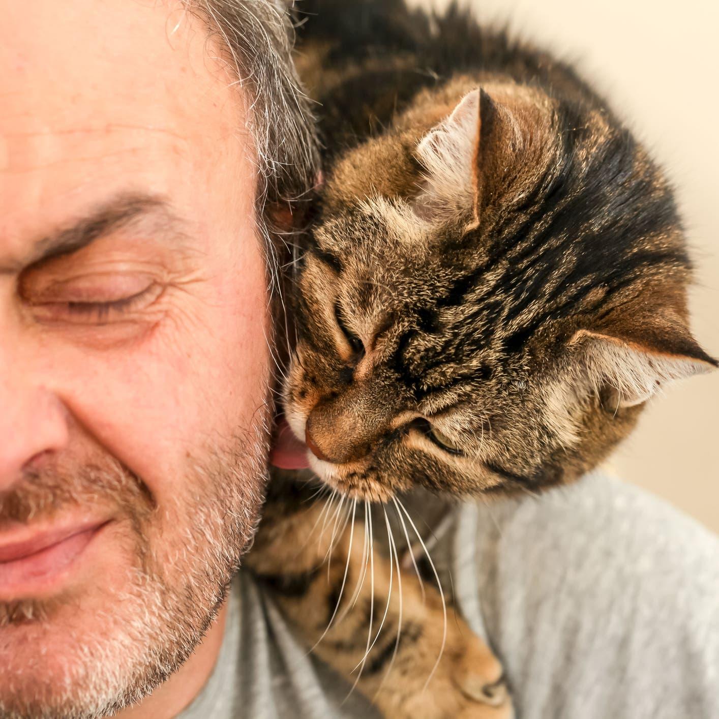 ما علاقة القطة بالاكتئاب؟ دراسة تعرض الفوائد