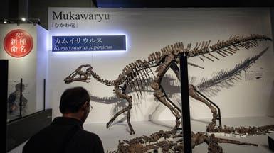 الاكتشاف الأكبر.. نوع جديد من الديناصورات في اليابان