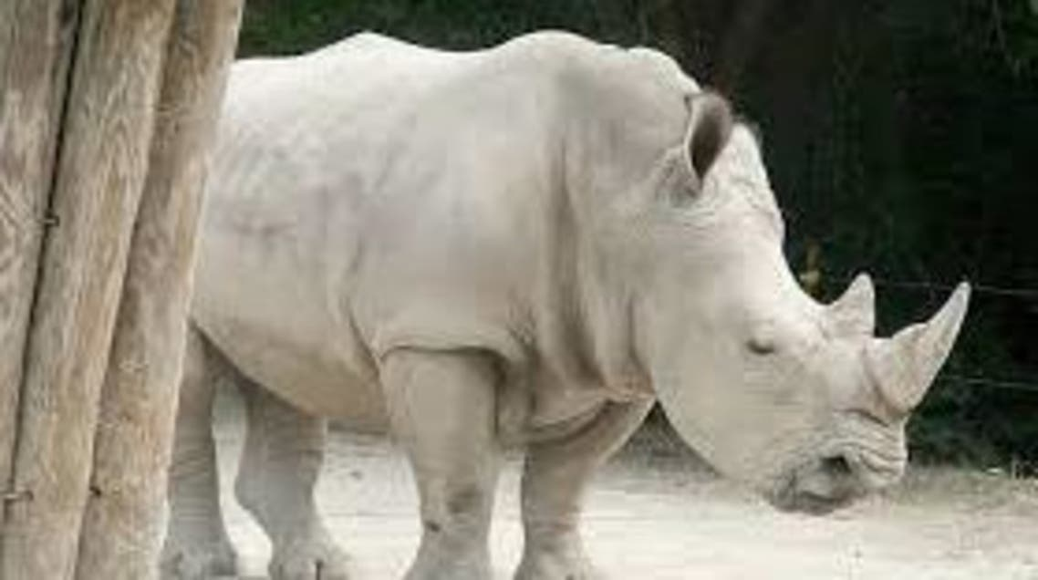 آخر ذكر من وحيد القرن الأبيض