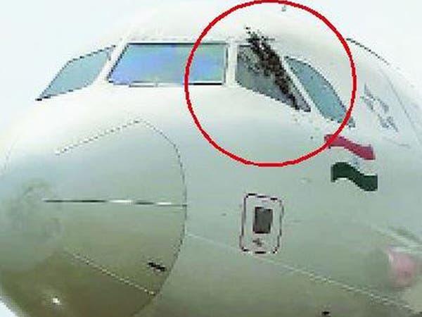 """نحل """"متوحش""""  يهاجم موظفي المطار.. ويؤخر إقلاع طائرة"""