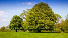 %58  من الأشجار الأصلية في أوروبا مهددة بالانقراض