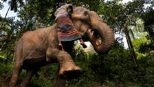 Sri Lanka bans 'drunk driving' of elephants in new animal protection law