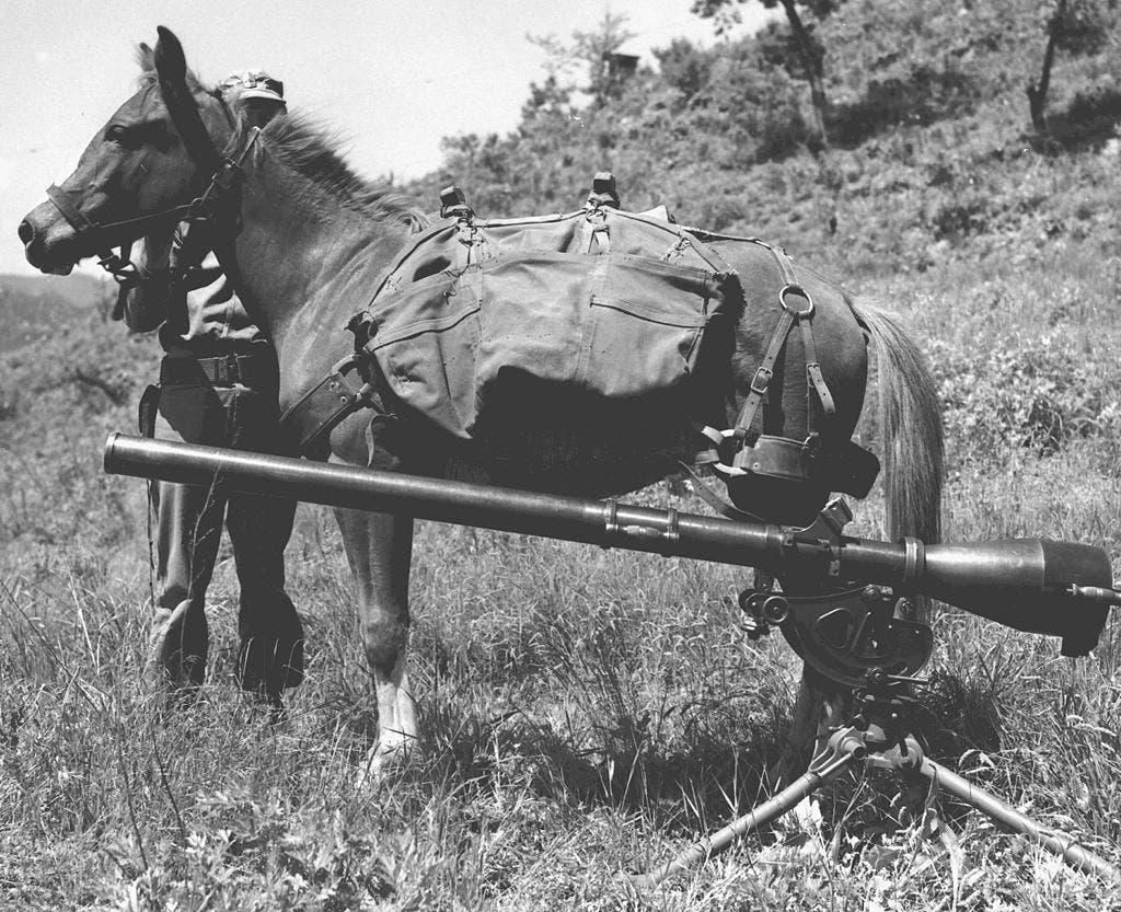 صورة لأنثى الحصان ريكلس خلال نقلها للمعدات العسكرية