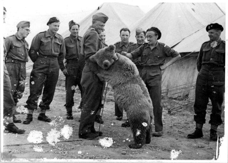 صورة للدب فويتك رفقة زملائه بالفرقة العسكرية