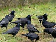 """لن تصدق..  """"طائر الشؤم"""" يكشف الأشرار!"""