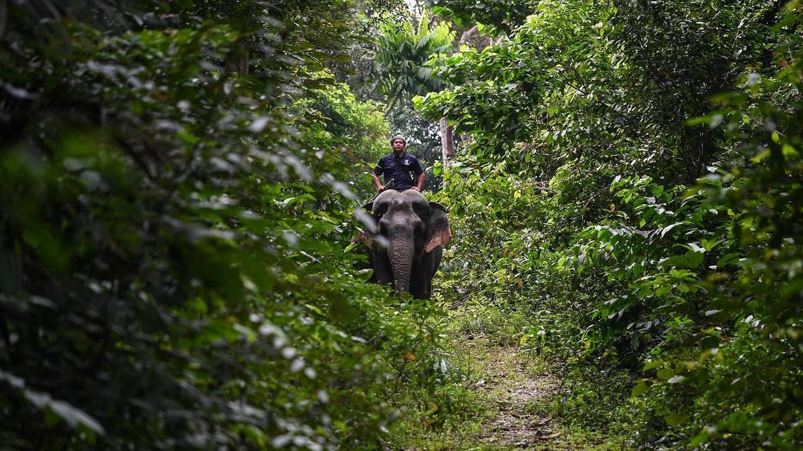 This picture taken on January 16, 2018 shows Malaysian mahout Suhaimi riding 43-year old rescued elephant Kasturi at the Kuala Gandah Elephant Conservation Centre in Kuala Gandah, about 100 kms (60 miles) outside Kuala Lumpur. (AFP)