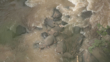 6 elephants drown, 2 rescued in Thai national park