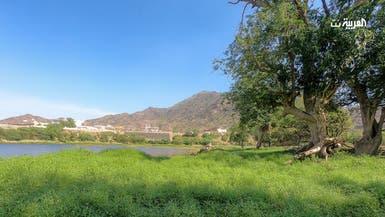 بالصور.. سد وادي مرة بتهامة جنوب السعودية يكتسي بالأخضر