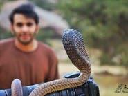 شاهد.. أفعى الكوبرا تنقض على كاميرا مصور سعودي وهذا ما حدث