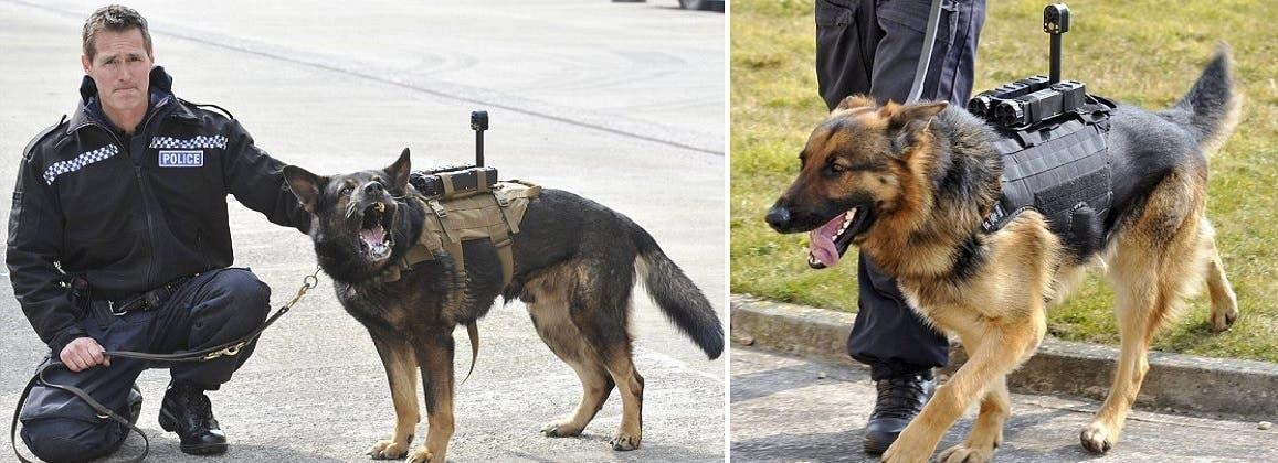 وأحيانا يضعون الكاميرا على ظهر الكلب