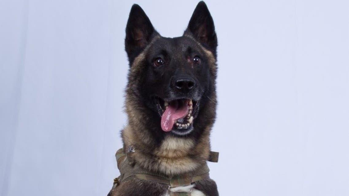 الكلب الذي قتل البغدادي