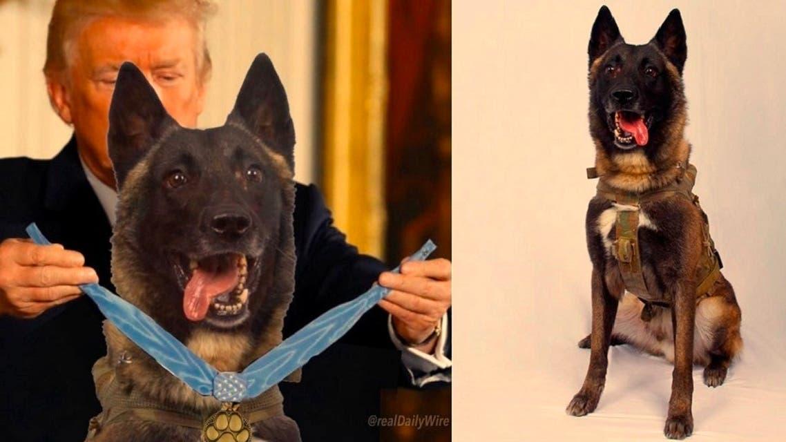 كلب البغدادي