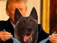 """ميدالية """"البطل الأميركي"""" من ترمب لكلب طارد البغدادي"""