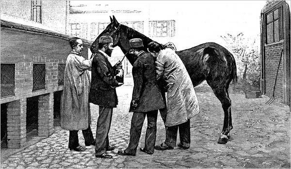 رسم تخيلي لعملية سحب دم أحد الأحصنة