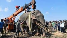 Rogue 'Laden' elephant gets a job, renamed 'Krishna'