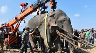 افسران امنیتی هند فیلی را که 5 نفر را کشته بود به دام انداختند