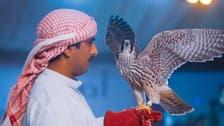 سعودی عرب : بازوں کی نیلامی میں ایک شاہین 4 لاکھ ریال میں فروخت