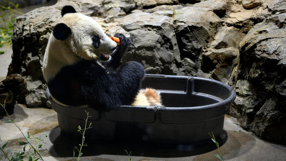 Bei Bei panda (AFP)