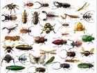 طنين ولدغ وعض.. بحث علمي يكشف لماذا نحتاج إلى الحشرات