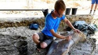 الإكوادور تعلن اكتشاف نوع جديد من الديناصورات