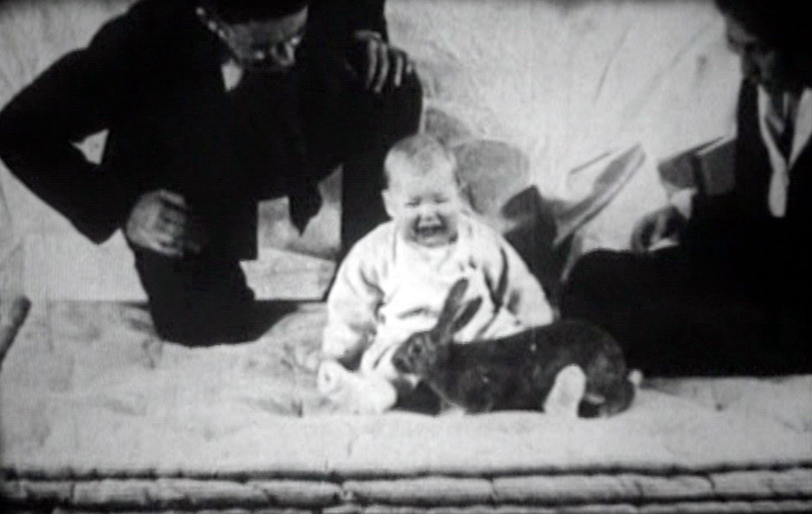 صورة للطفل ألبرت أثناء تفاعله مع أرنب