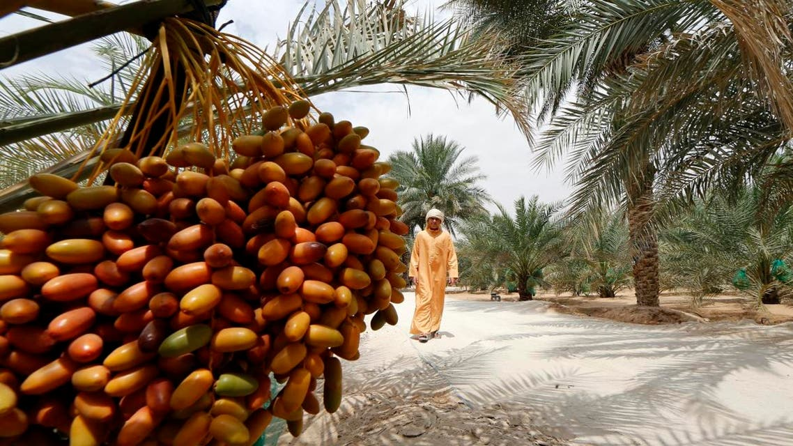 An Emirati man walks past a date palm tree during the annual Liwa Date Festival in the western region of Liwa, south of Abu Dhabi on July 21, 2016. (AFP)