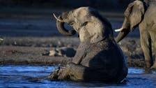 Mystery surrounding hundreds of dead elephants in Botswana baffles scientists