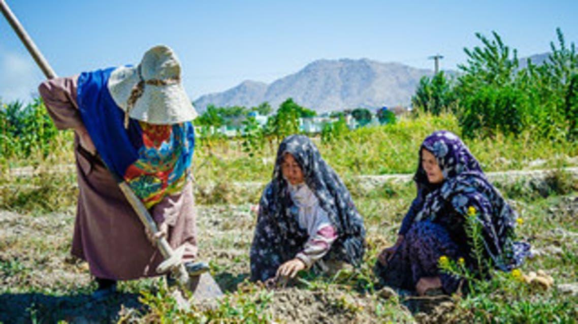 افغانستان... 616هزار و 400 زن طی چهار سال آینده در بخش زراعت خودکفا میشوند