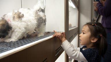 احذروا متاجر الحيوانات الأليفة.. وهذا السبب!