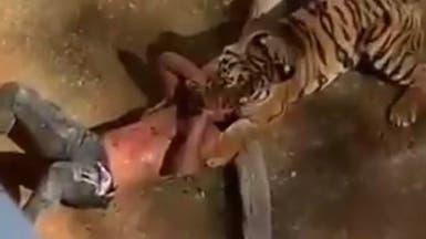 بالفيديو.. نمر ينقض على زائر سوداني في الرياض