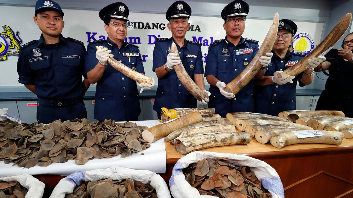 Seized pangolin and Tusks scales are shown by Malaysian Customs officials after a press conference at Customs office in Sepang, Malaysia on Wednesday, Aug. 2, 2017. (AP)