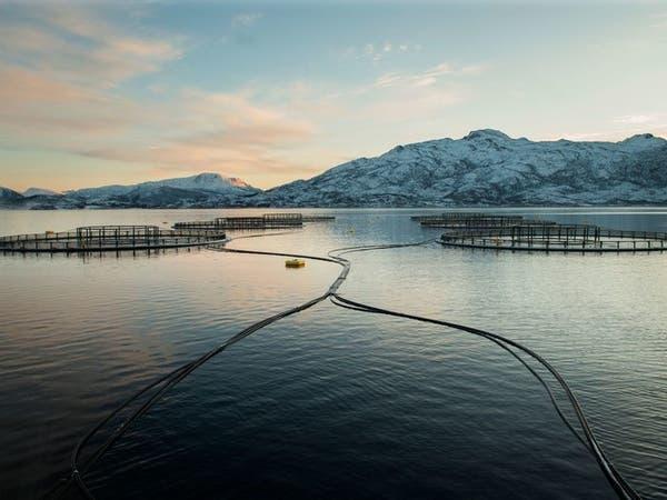 تجارب علمية لإنهاء تغذية أسماك المزارع على الأصغر حجماً