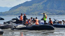 Crowds rush to save whales stranded on New Zealand beach