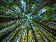 بالعلم.. زراعة مليار شجرة باستخدام الدرون