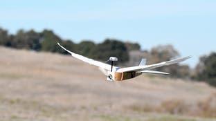 طائرة مسيرة مصنوعة من 40 ريشة حقيقية.. تحلّق كالطيور