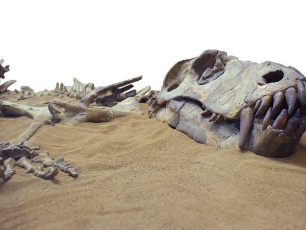 قبل 66 مليون سنة..لهذا السبب انقرضت الديناصورات!