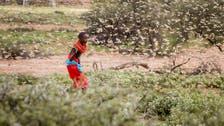 FAO warns 'ravenous' locust outbreak threatening East Africa