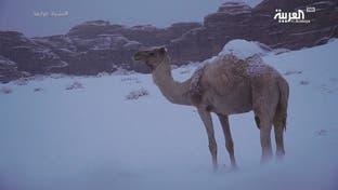 نشرة الرابعة | السعودية تحت كتلة باردة وتبوك والجوف تترقبان الثلج