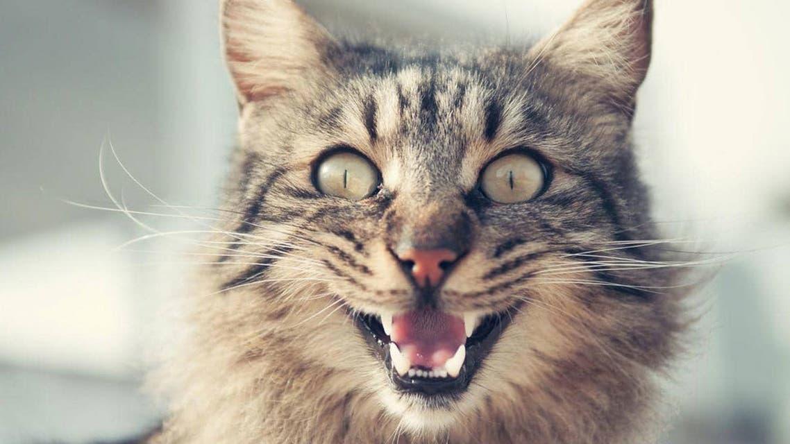 گربه شرور صاحبش را دو روز به گروگان گرفت