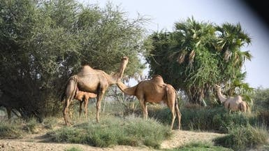 """تعرف على مركز """"عتود"""".. طبيعة خلابة جنوب السعودية"""