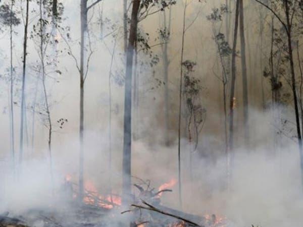 أمطار غزيرة تتعاطف مع أستراليا وتخمد حرائق غاباتها المستعرة