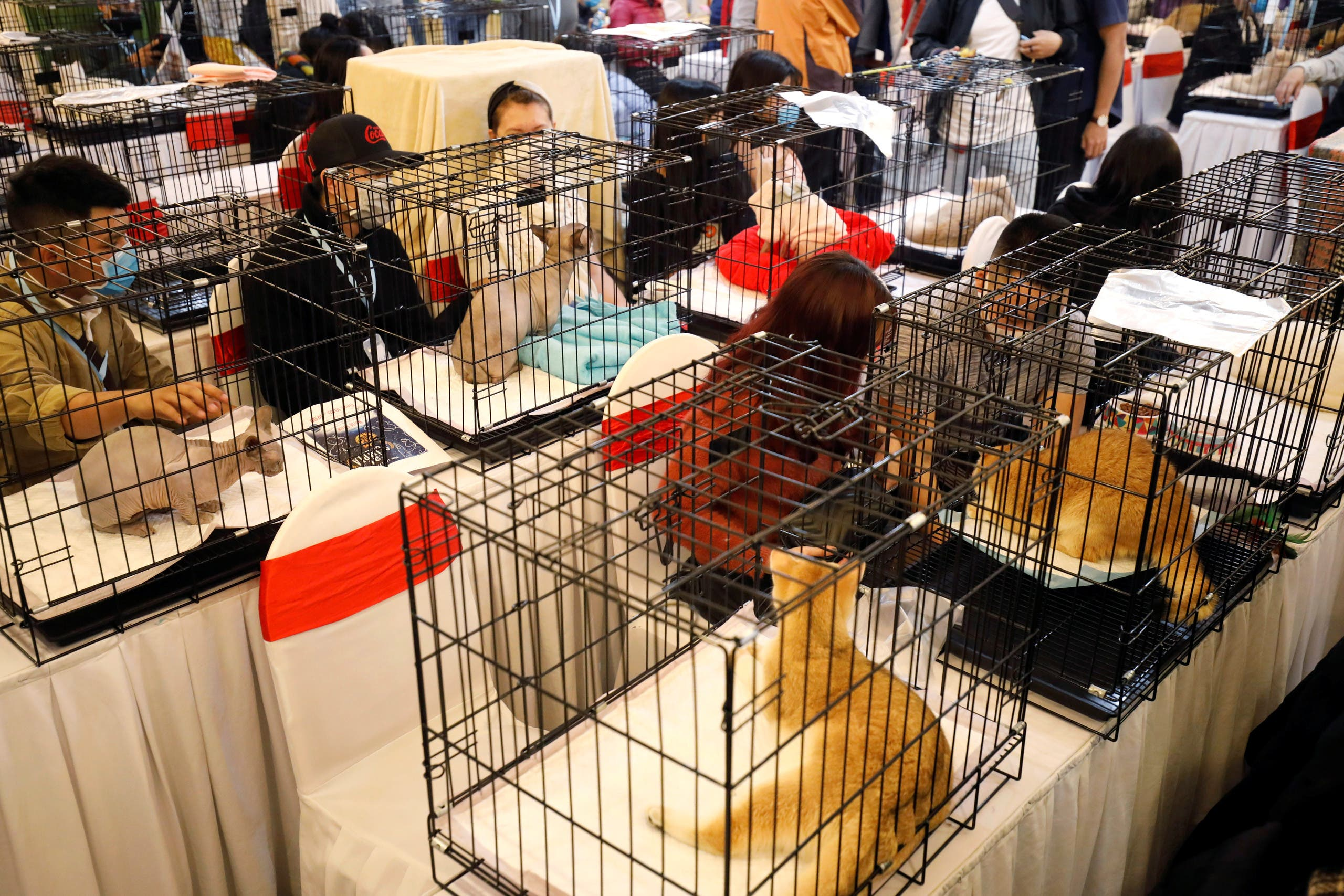 Cats are seen on cages during the Vietnam's first cat show in Hanoi, Vietnam February 16, 2020. REUTERS