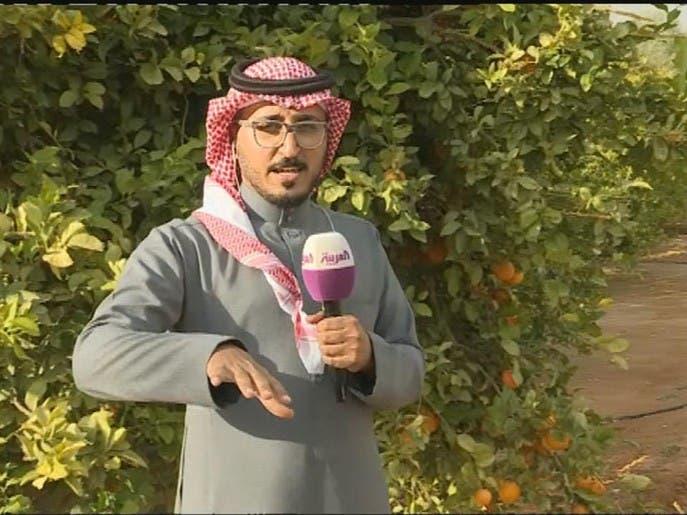 نشرة الرابعة   مزارعو العلا يفتحون أبواب مزارعهم لسيّاح المنطقة