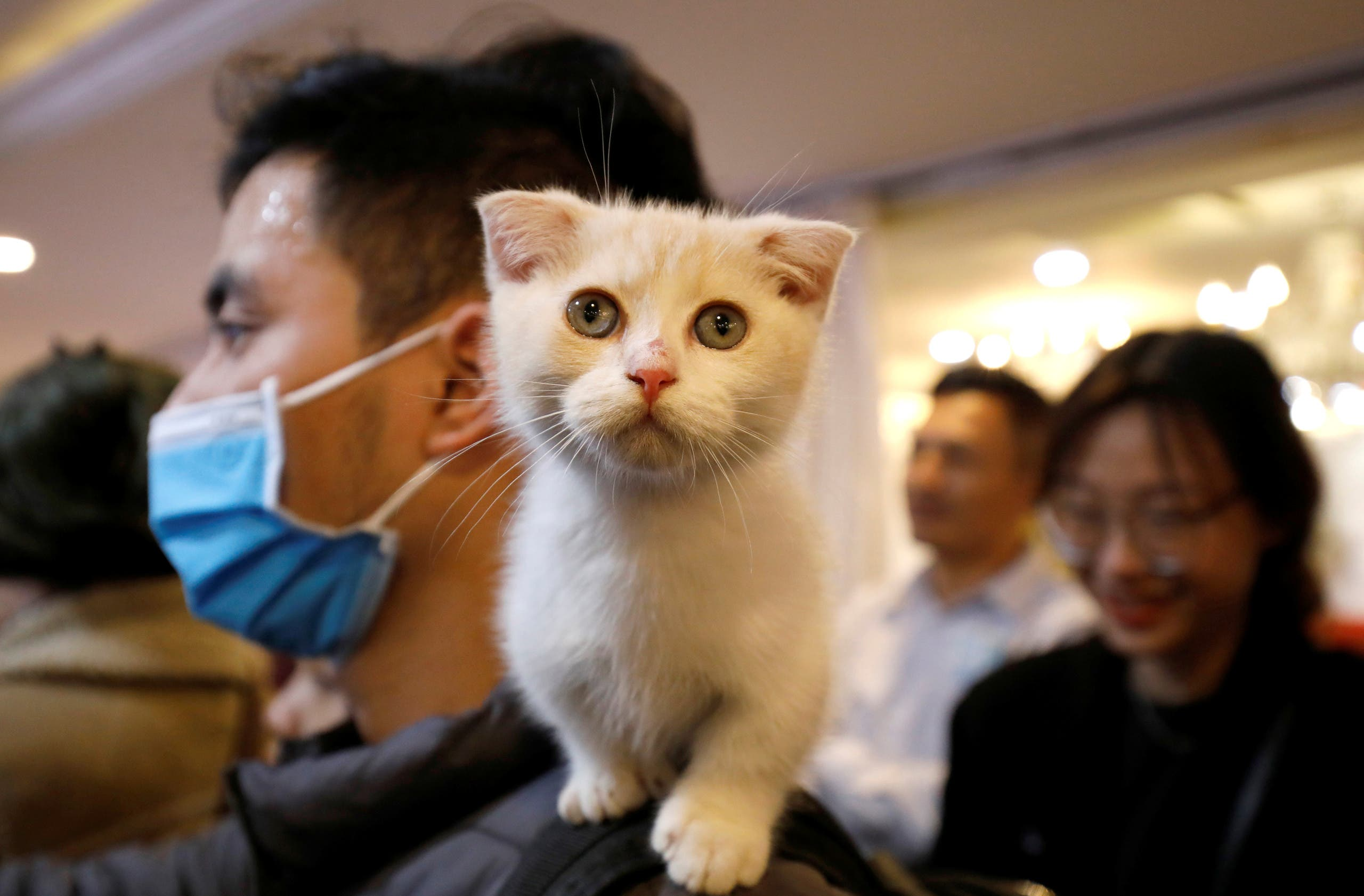 A cat is seen on the shoulder of her owner during the Vietnam's first cat show in Hanoi, Vietnam February 16, 2020. REUTERS