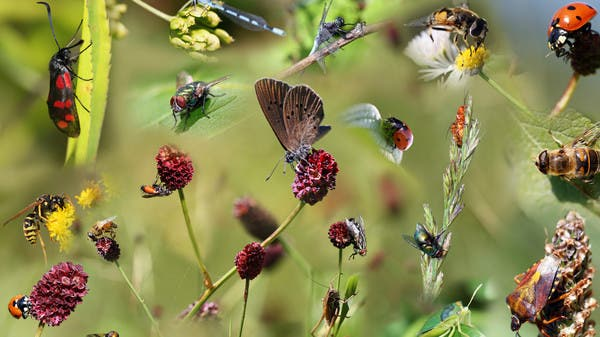 مصير البشر والحشرات واحد.. تحذير من فقدانها!