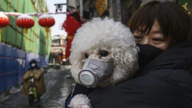كلب يحمل فيروس كورونا.. هونغ كونغ تعزل الحيوانات
